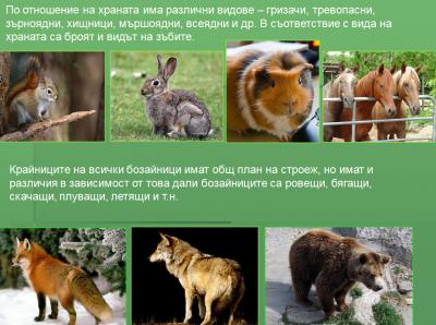 Тема: Плацентни бозайници - Изображение 2