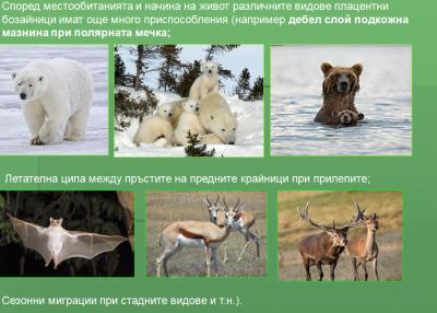 Тема: Плацентни бозайници - Изображение 3