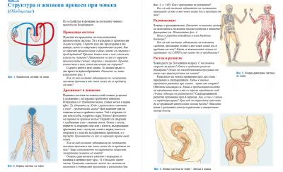 Тема: Структура и жизнени процеси при човека - Изображение 1
